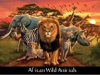 Animal Postcards USA