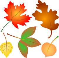 Pocket Letter Newbies #5 Fall Leaves/Colors