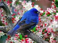 WIYM: Pretty Bird Postcard