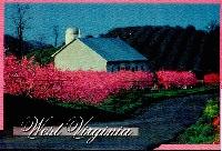 20 Postcard swap - USA