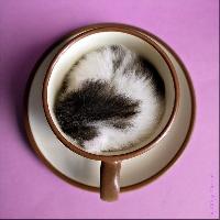 Cats are Liquids - Profile Deco
