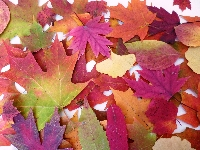 Send an autumn leaf with card! USA