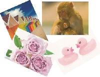 PCG: Send a Postcard for Christmas - 3
