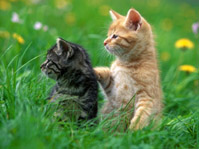 WIYM: Cat Postcards