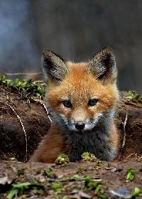 woodland animal postcard swap
