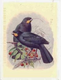 Bird PC #7