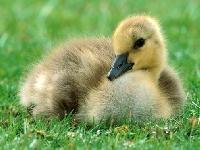 WPS - Easter Baby Animal Postcard