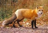 NH: Furry Animal Postcard Swap