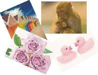 WIYM: Pick 1 Postcard (Mar)
