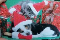 Christmas card as postcard #14 - Dog