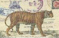 Postcard Swap - BIG CATS!