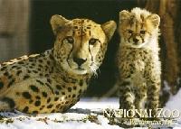 Zoo Postcard *INTL* Quick Swap