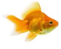 WIYM: Handmade Postcard-Fish