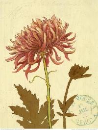 November's Birth Flower / Chrysanthemum ATC Swap