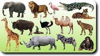 Animal Lovers PC Swap