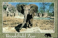 Zoo Postcard Swap