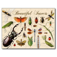 Find the PostCard - Insect(s))