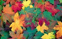 Pinterest: Leaves