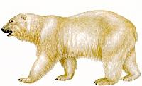APDG - Mega Swaps - Polar Bears