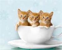 kitty cats swap!