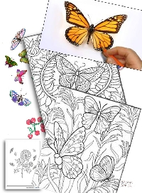 Colour me a Butterfly