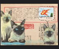 CC: Cat collage postcard
