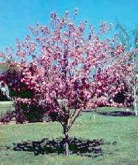 SS ~ Trees and shrubs in bloom now!
