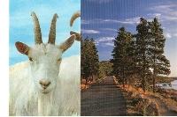 PH: 2 + 2 Postcard Swap #2