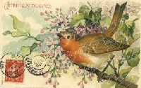 WIYM:  BIRD POSTCARD