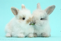 ATCs Furry Friends #3: Rabbits/Bunnies