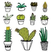 ATC - Cactus (INTL)