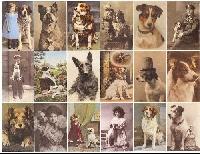 Pet Picture Postcard - Newbie Friendly