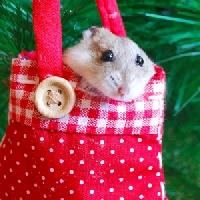 Hamster ATC (USA)