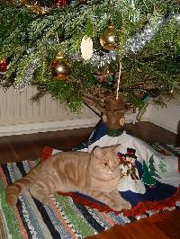 Christmas Stocking Swap for British Birds