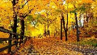 Celebrate Autumn International!