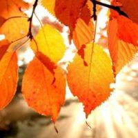 SotM Autumn Leaves & Meditation Swap