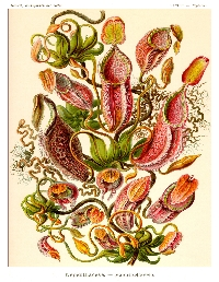Botanical ATC