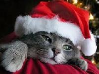 $ Store Christmas scavenger hunt