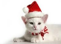 Christmas PC - Cat 🎄 Newbie Friendly