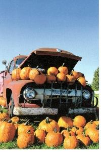 PH: Scavenger Hunt - Fall/Autumn #2