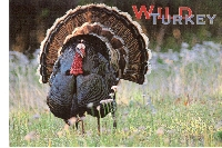 PH: Spell THANKSGIVING With Postcards (USA/Canada)