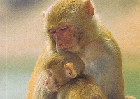 monkey postcard tag
