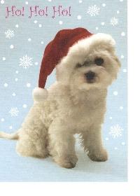 PH: 2 Animal PCs + an Animal Christmas Card