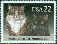 WIYM: Favorite Kitty Story & flat surprise: USA