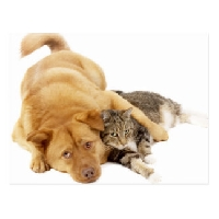 PTG: Dogs versus Cats!
