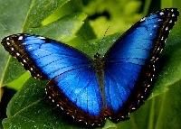 Butterflies - Sender's Choice / USA