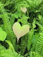 Share the love (nature hearts)  Valentine's inspir