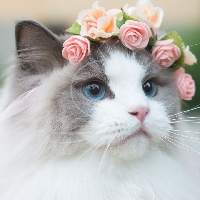 FTLOMPL - February Animal of the Month Cats