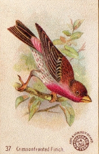 MFF:  Bird Collage Art Journal Page