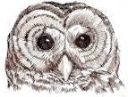 DPT: Owl ATC